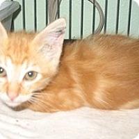 Adopt A Pet :: Sunkist - Shelton, WA