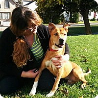 Adopt A Pet :: Tucker - Hamilton, ON