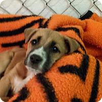 Adopt A Pet :: Cracker - Scottsdale, AZ