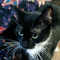 Adopt A Pet :: Missy - Eugene, OR