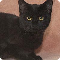 Adopt A Pet :: Pebbles - Elmwood Park, NJ