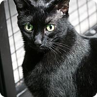Adopt A Pet :: Doyle - Sarasota, FL