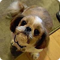 Adopt A Pet :: BARRY - Eden Prairie, MN