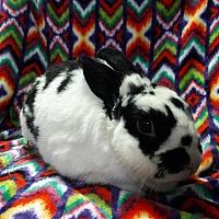 Adopt A Pet :: Orlando - Erie, PA