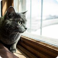 Adopt A Pet :: April - Red Wing, MN