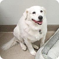 Adopt A Pet :: Polaris - Gilbert, AZ