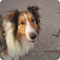 Adopt A Pet :: MILO - apache junction, AZ