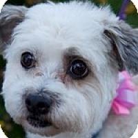 Adopt A Pet :: Demi - La Costa, CA