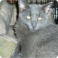 Adopt A Pet :: Roger - Westfield, MA
