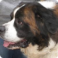 Adopt A Pet :: MALCOLM -- ADOPTION PENDING - Sudbury, MA