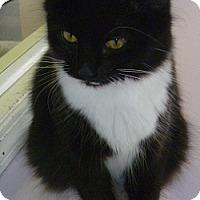 Adopt A Pet :: Ella - Hamburg, NY