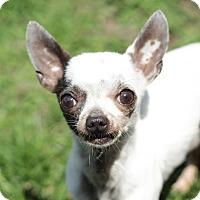 Adopt A Pet :: Fred - Romeoville, IL