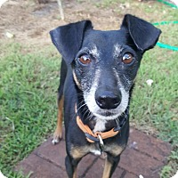 Adopt A Pet :: Jack - Ocean Ridge, FL
