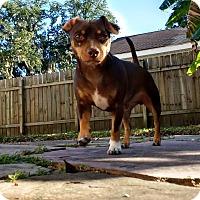 Adopt A Pet :: Dante - Marrero, LA