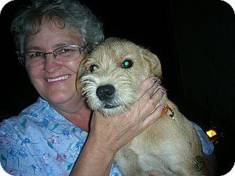 Terrier (Unknown Type, Medium) Mix Dog for adoption in Bluff city, Tennessee - BLAKE