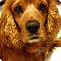 Adopt A Pet :: JAZZ - Tacoma, WA
