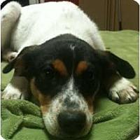 Adopt A Pet :: Banjo - Glastonbury, CT