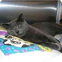 Adopt A Pet :: Mookie - New Port Richey, FL