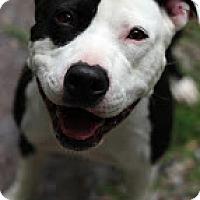 Adopt A Pet :: Mika - Tinton Falls, NJ