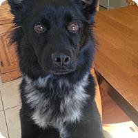 Adopt A Pet :: Zues - Largo, FL