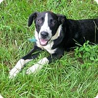 Adopt A Pet :: Andy - Wilmington, DE