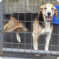 Adopt A Pet :: Sparky--RESCUED! - Marlinton, WV