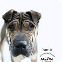 Adopt A Pet :: Hunk - pending - Mira Loma, CA
