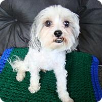 Adopt A Pet :: Teddy - Rosalia, KS