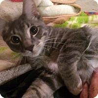 Adopt A Pet :: Gus - Chambersburg, PA