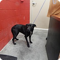 Adopt A Pet :: Betty - Pikeville, KY