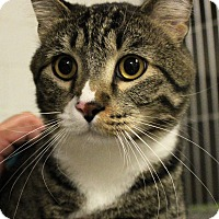 Adopt A Pet :: Taz - Casa Grande, AZ