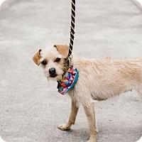 Adopt A Pet :: Corona - Chino Hills - Chino Hills, CA