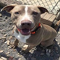 Adopt A Pet :: TYSON - Canfield, OH