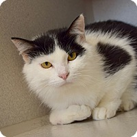 Adopt A Pet :: Lilly - Des Moines, IA