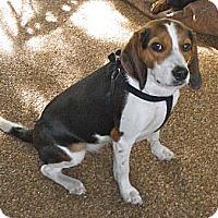 Adopt A Pet :: Maggie - Palm Bay, FL