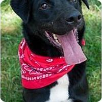 Adopt A Pet :: Starbucks - Afton, TN