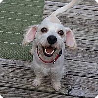 Adopt A Pet :: Buster - Kingwood, TX