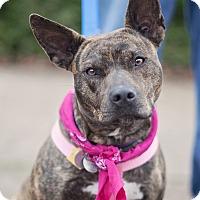 Adopt A Pet :: Tiger Lily - Kingwood, TX