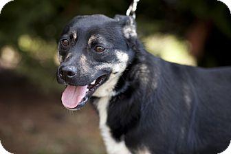 Terrier (Unknown Type, Medium)/Miniature Pinscher Mix Dog for adoption in Wattertown, Massachusetts - Toby