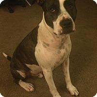 Adopt A Pet :: Max - Oakland Gardens, NY