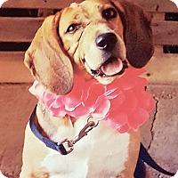 Adopt A Pet :: Jackie - Millersville, MD
