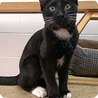 Adopt A Pet :: Ava - Ozark, AL