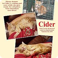 Adopt A Pet :: Cider - Hearne, TX