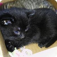 Adopt A Pet :: Miko - Melbourne, FL