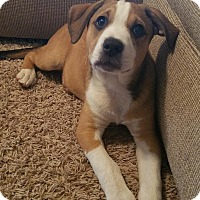 Adopt A Pet :: Patsy - Broken Arrow, OK