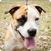 Adopt A Pet :: Kay - Daleville, AL