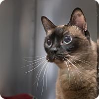 Adopt A Pet :: Godiva - Houston, TX