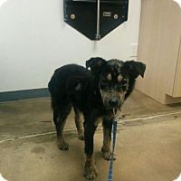 Adopt A Pet :: Einstein - Houston, TX