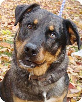 Catahoula Leopard Dog/Australian Cattle Dog Mix Dog for adoption in Red Bluff, California - Romeo