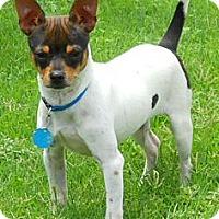 Adopt A Pet :: Beauregard - Oklahoma City, OK